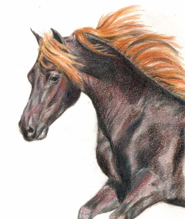 horse 51