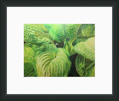 hosta next small framed