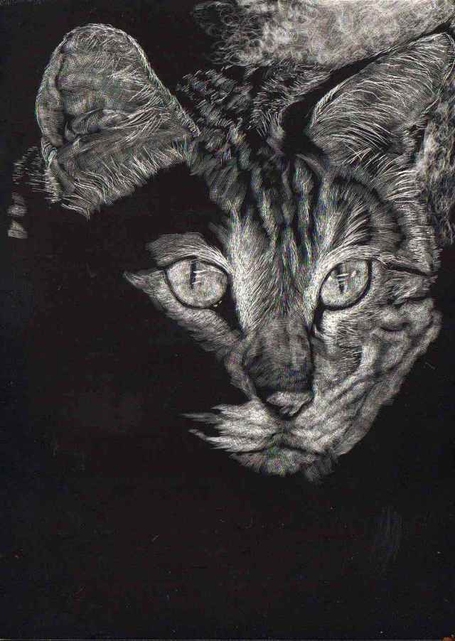 scratchboard allie 1 edit